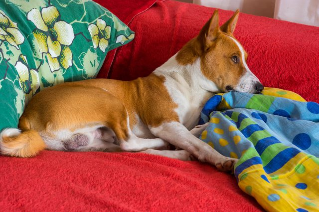 How to Get Rid of Dog Hair Out of Blankets in 10 Minutes