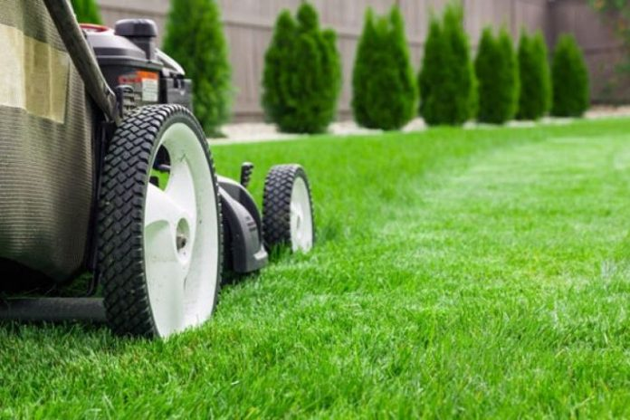 Quick Tips for a Lush Lawn