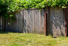How To Clean Up Your Overgrown Backyard