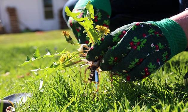 Benefits of Removing Weeds From Your Garden