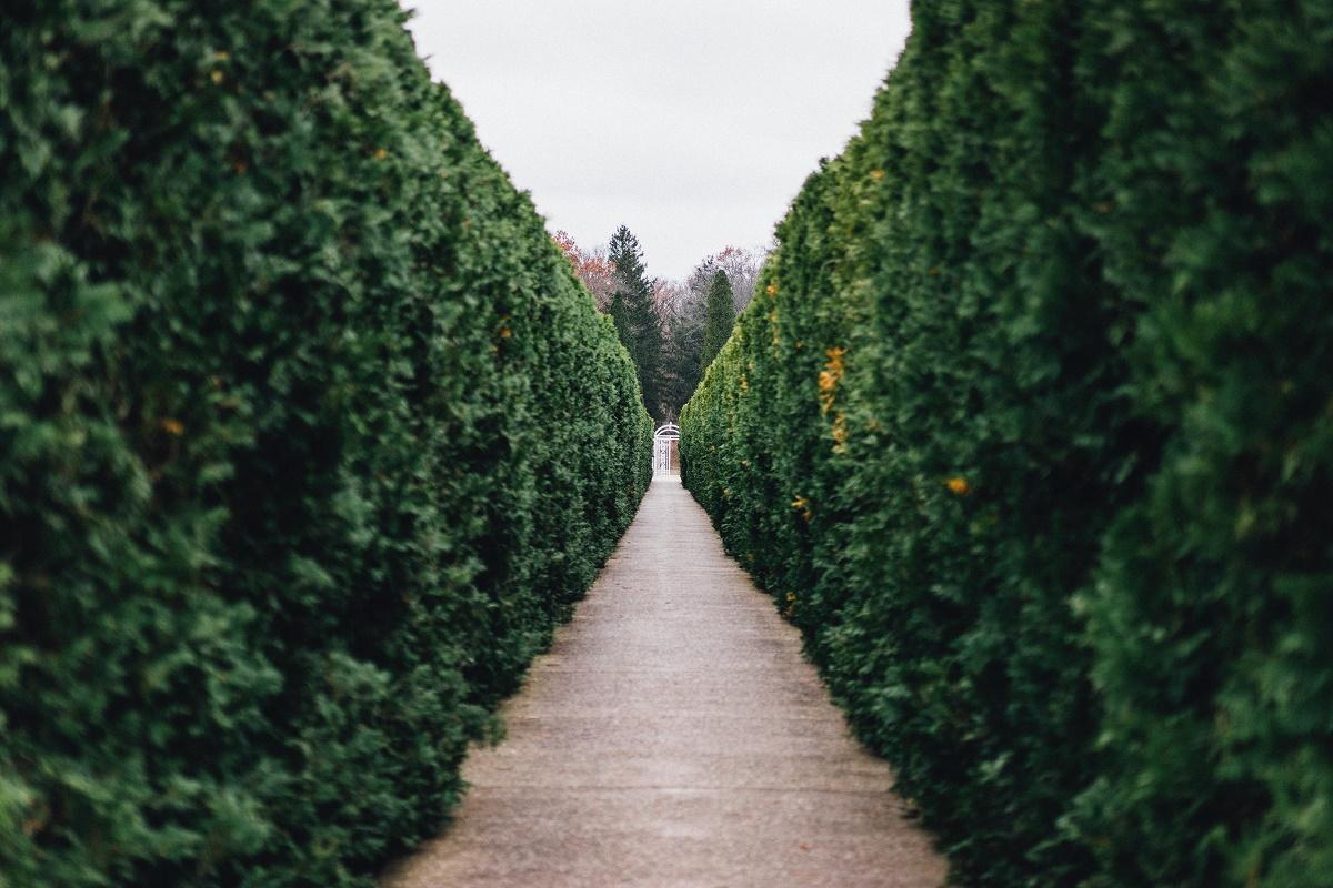 Hedge as fence