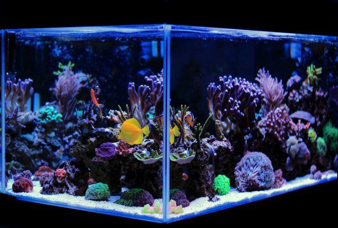 Saltwater-vs-Freshwater-Aquarium