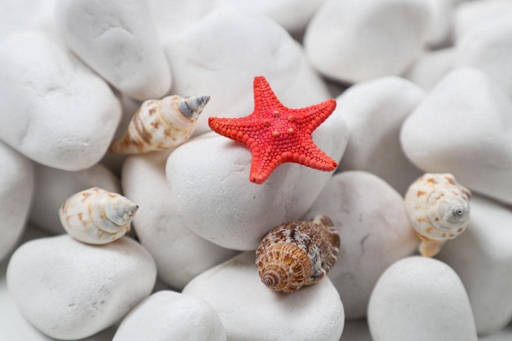 White-pepple-aquarium-decor