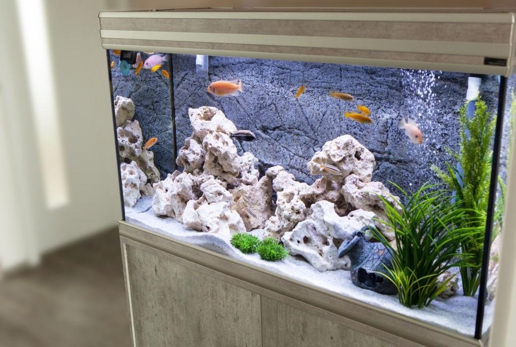 aquarium-bubble-stone