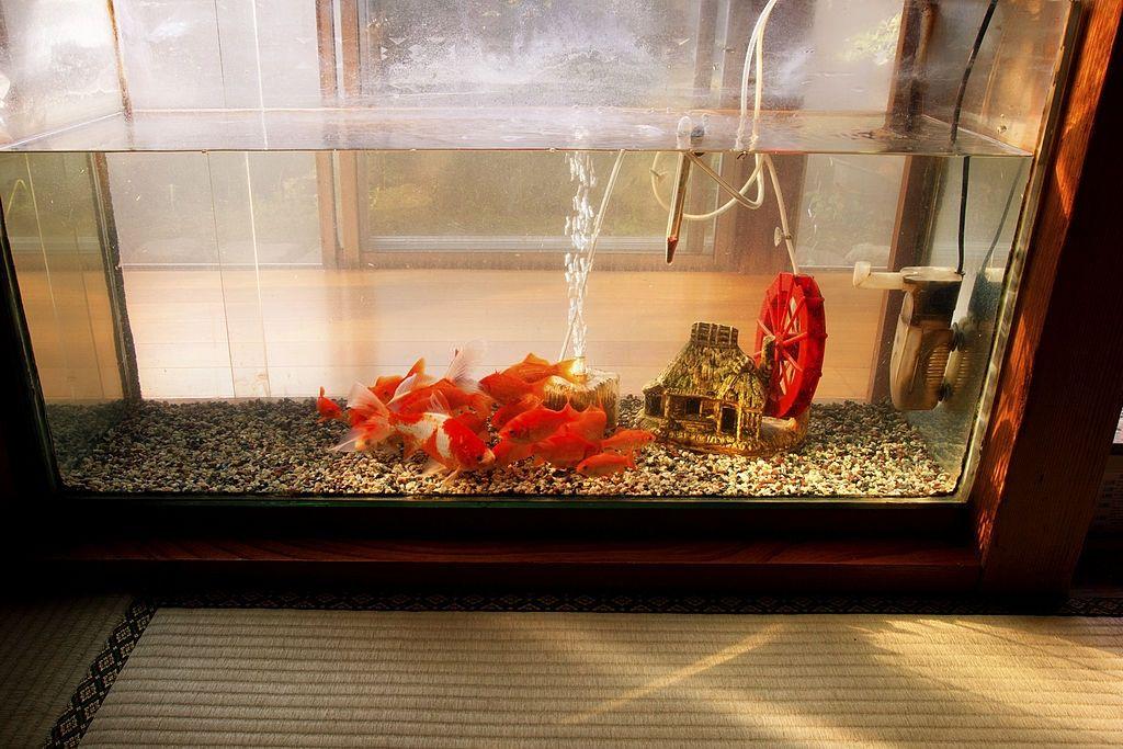 ideas-to-design-a-watertight-acrylic-aquarium
