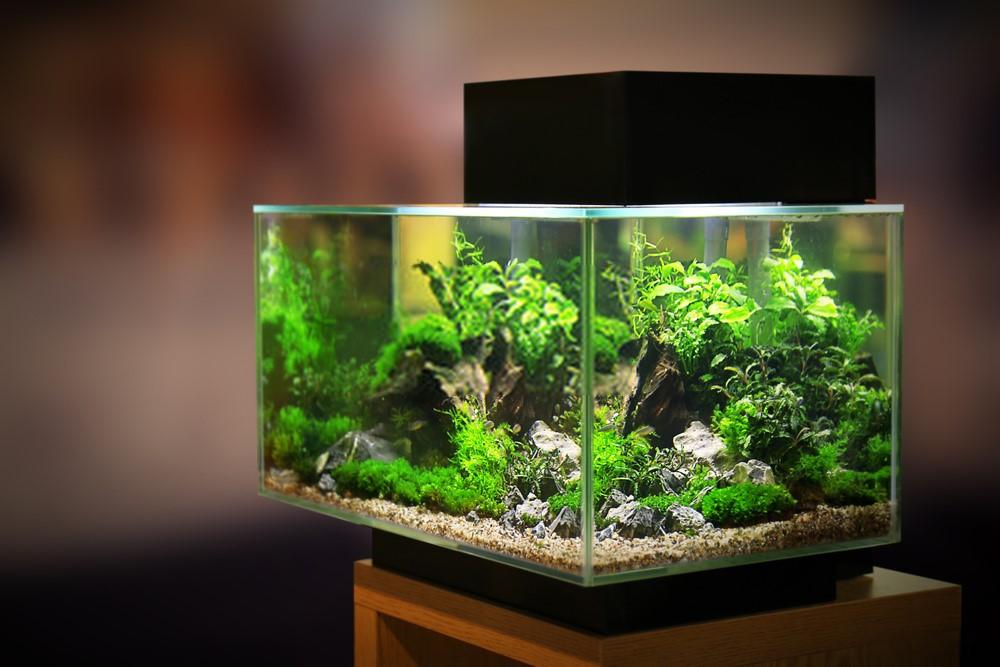 ideas-to-design-a-watertight-acrylic-aquarium-2