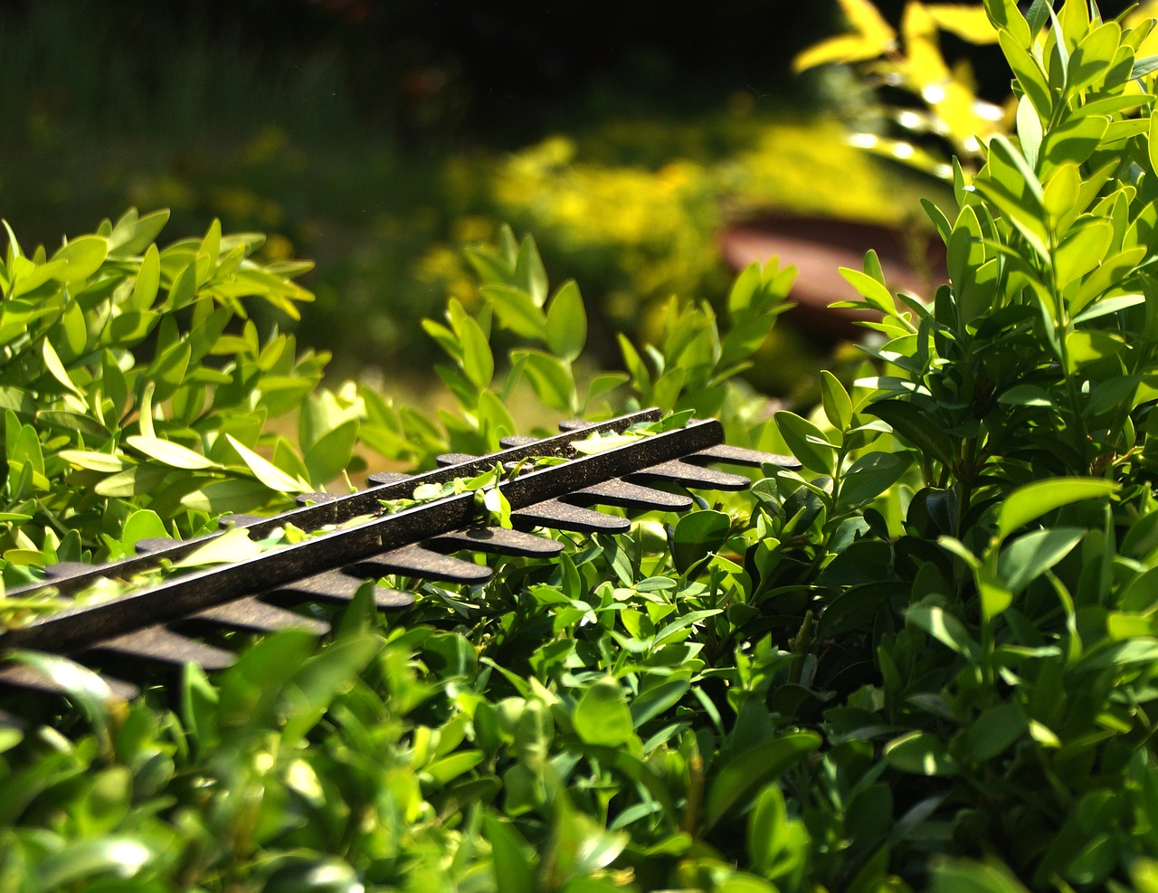 hedge-trimmer-power
