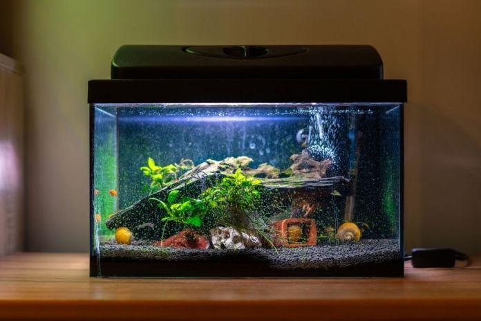 rectangle-acrylic-aquarium