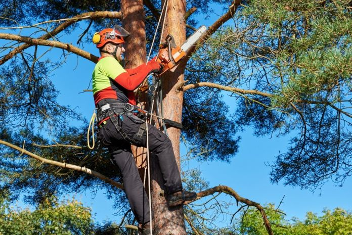 The-Major-Advantages-of-Hiring-an-Arborist