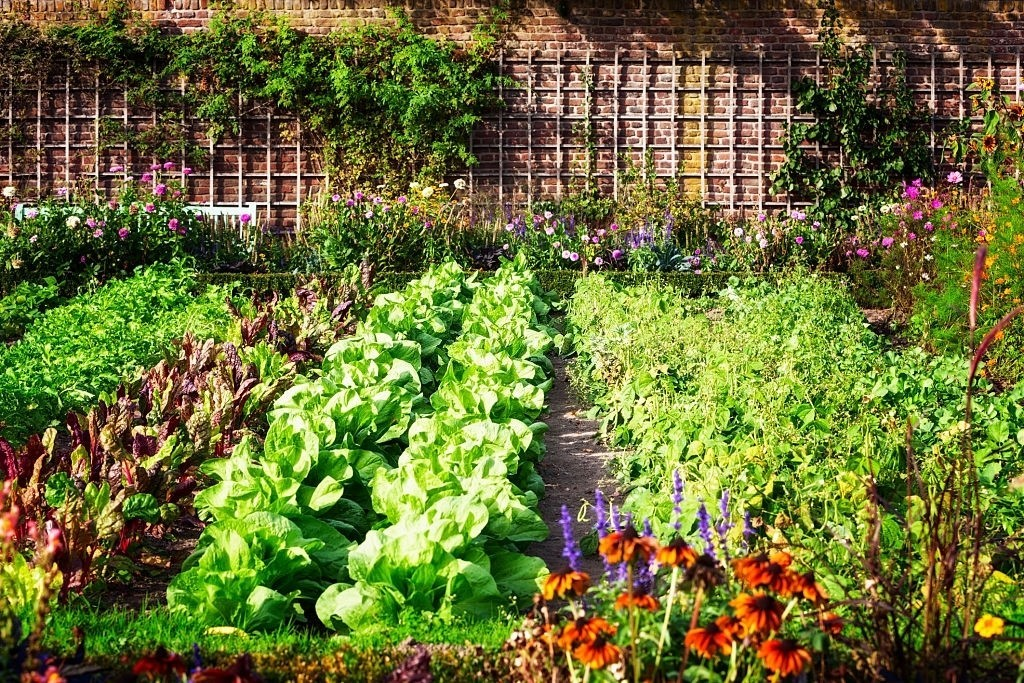 grow-your-own-vegetable