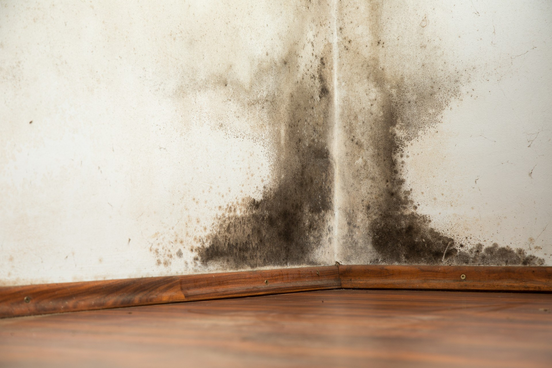 what-black-mold-is-like