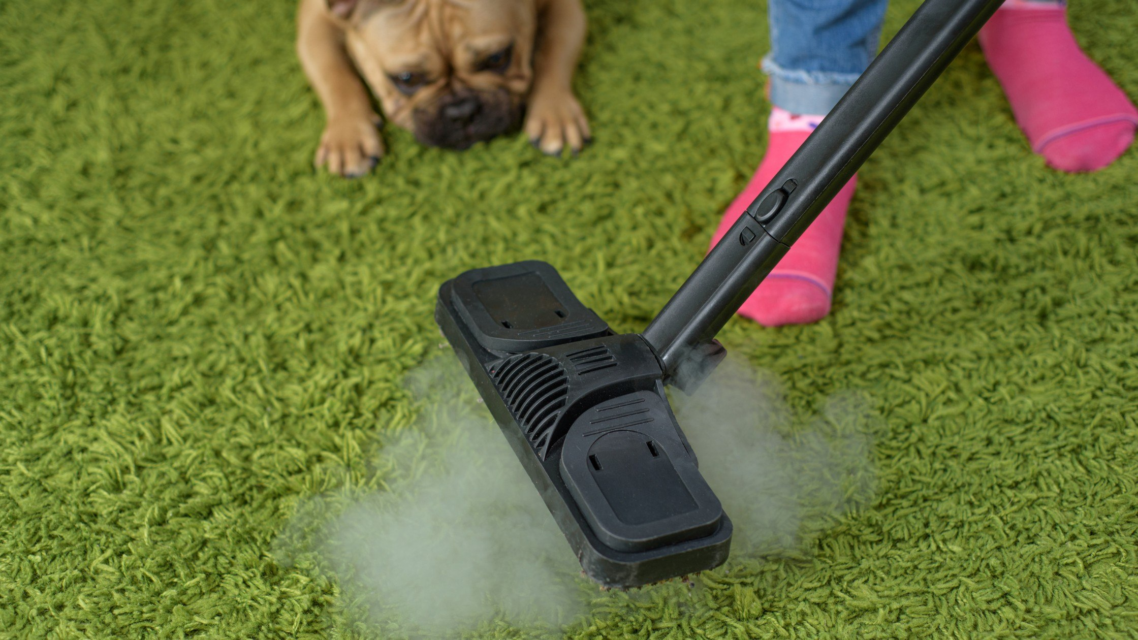 how-to-get-pet-urine-smell-out-of-carpet-3