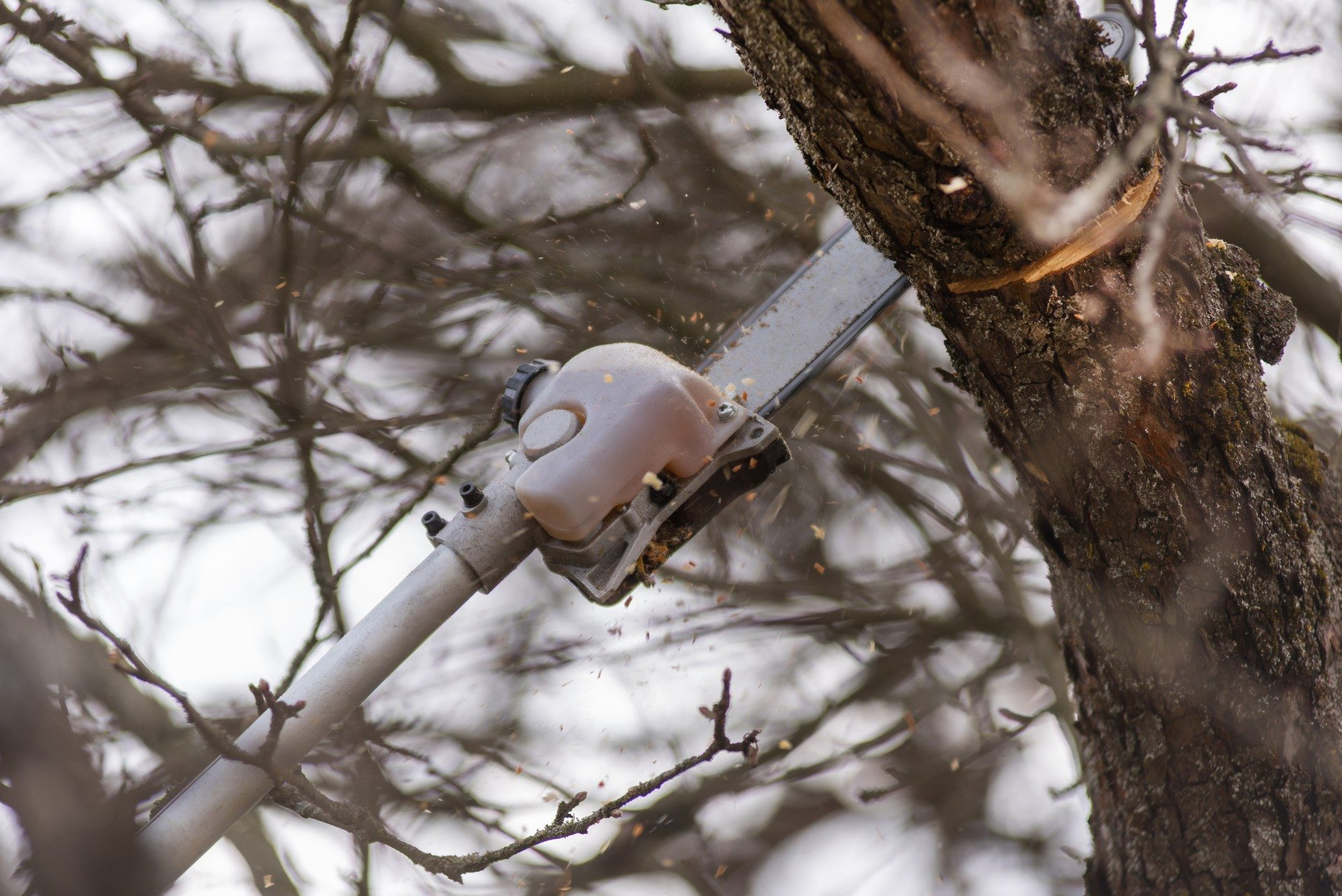 tree-pruning-tools