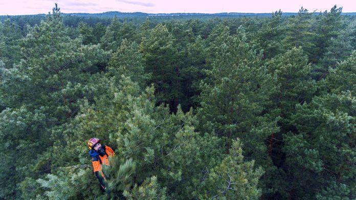 benefits-of-hiring-an-arborist