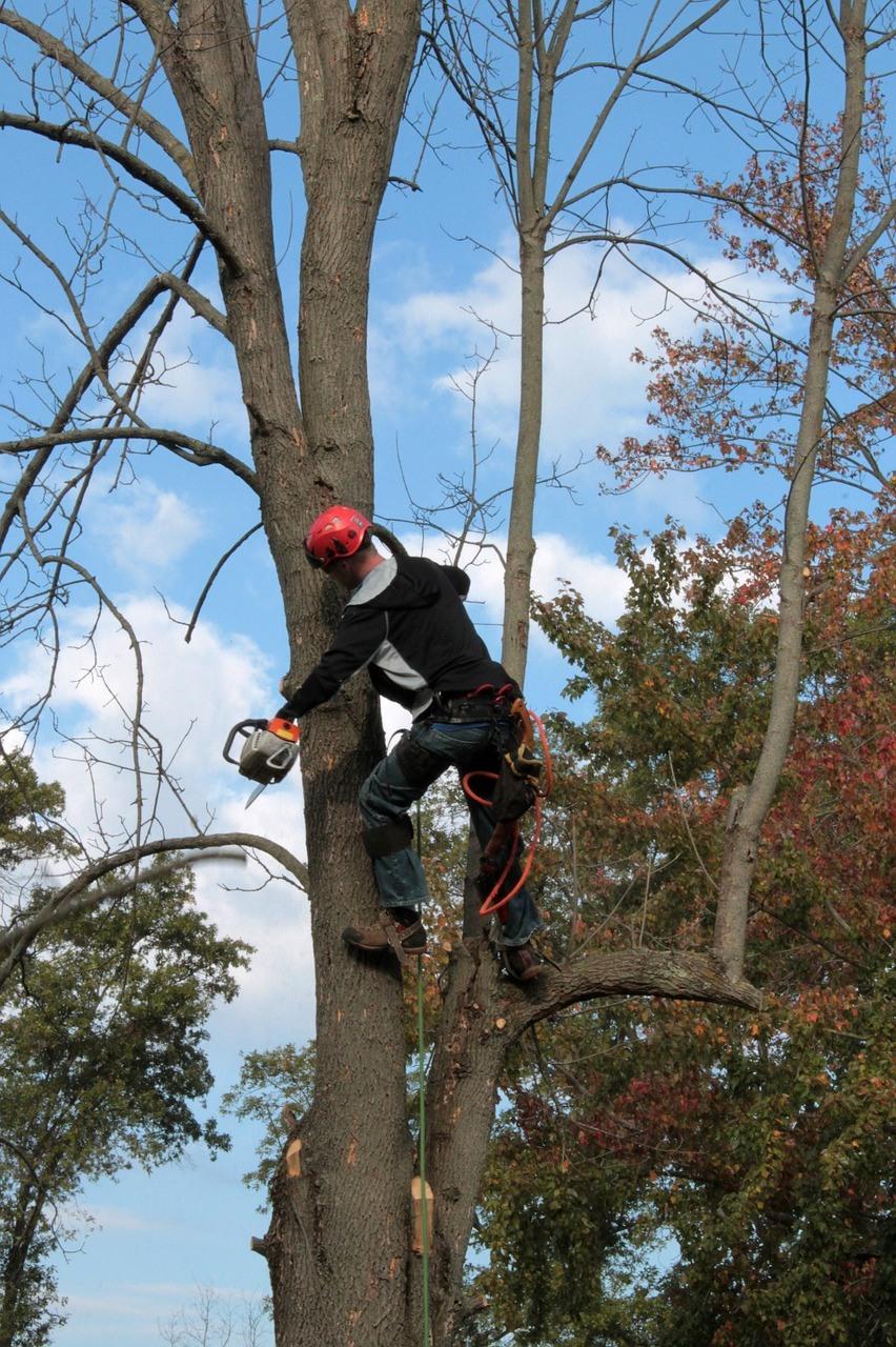 benefits-of-hiring-an-arborist-1