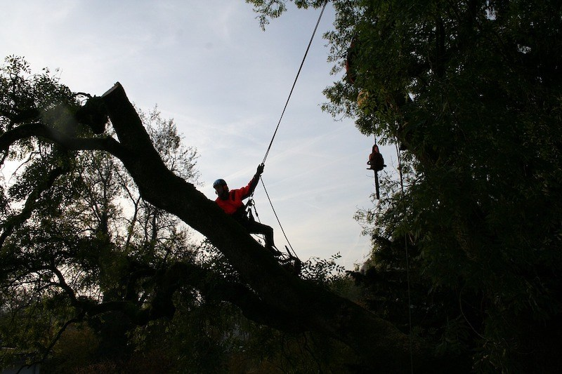 what-are-professional-arborists-qualifications-1
